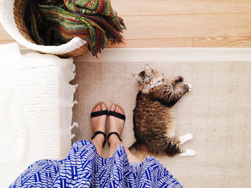 cat by feet